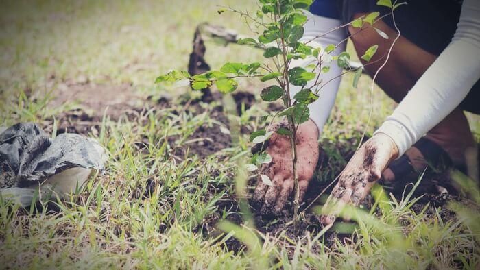 Environmental Restoration