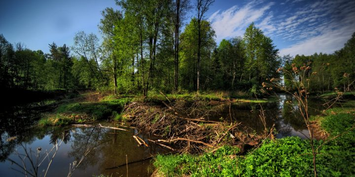 Redefining Ecological Restoration In The 21st Century