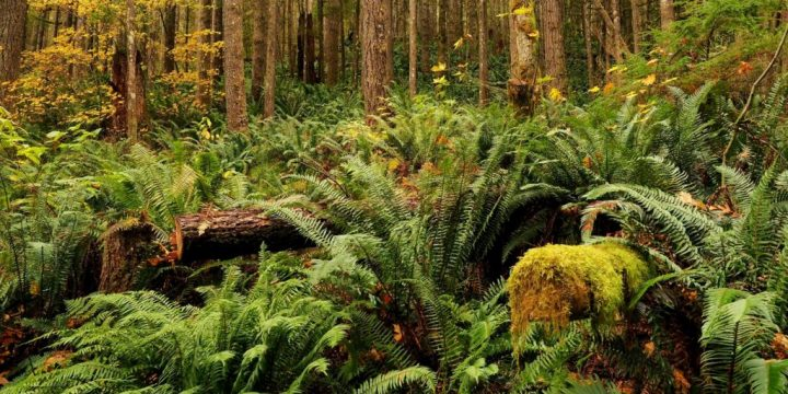 Causes of Ecosystem Damage and Its Restoration