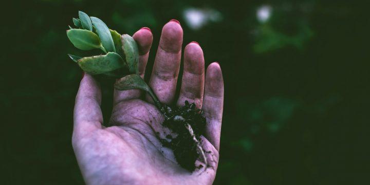 Environmental Restoration: Simple Tips